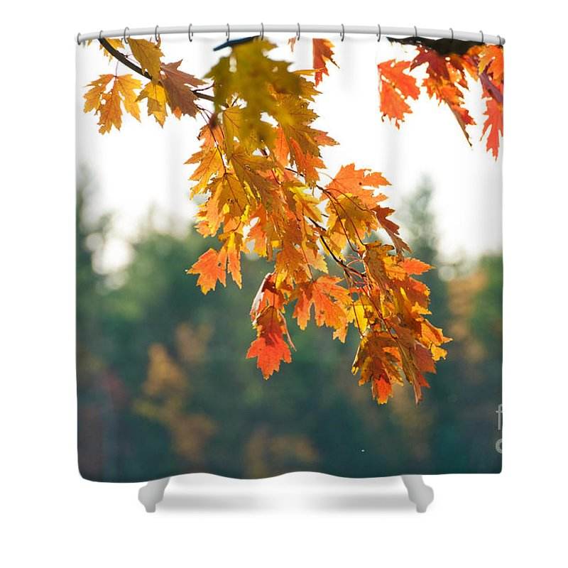 Fall Shower Curtain featuring the photograph The Last Bit Of Fall by Cheryl Baxter