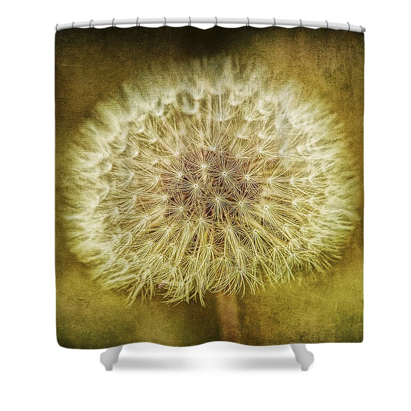 Art Shower Curtain featuring the photograph The Lion's Tooth by Randall Nyhof