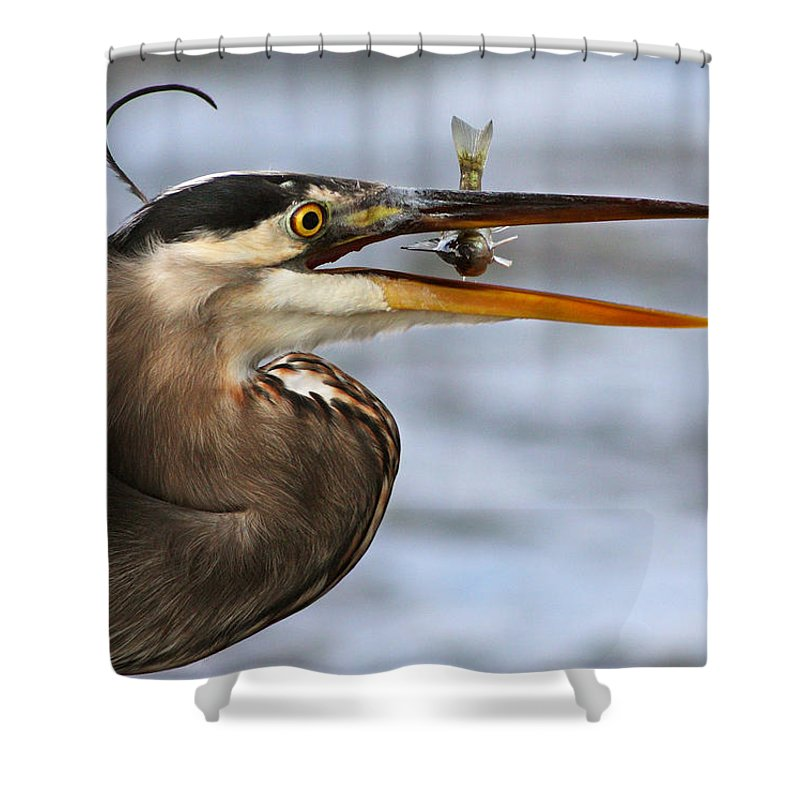 Grey Shower Curtain featuring the photograph The Little Fish by Mircea Costina Photography