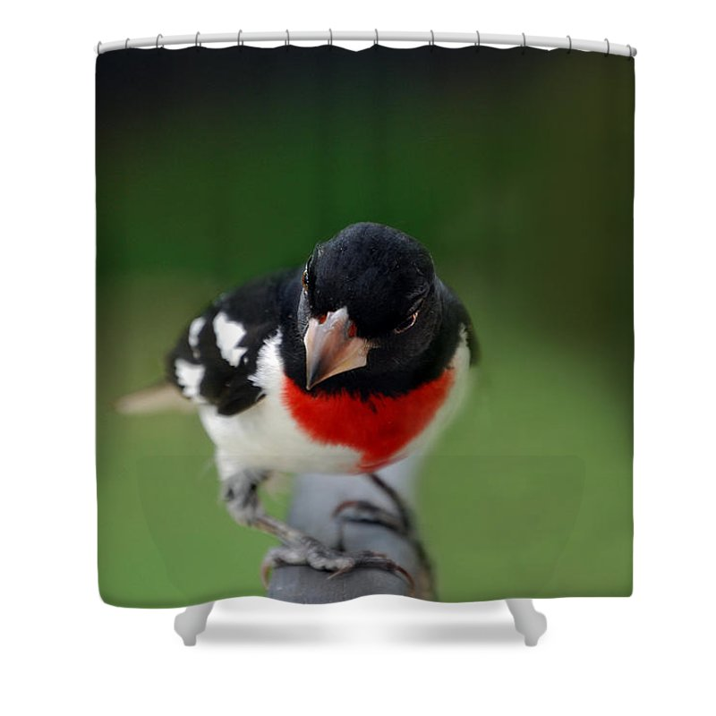 Bird Shower Curtain featuring the photograph The Look by Skip Willits