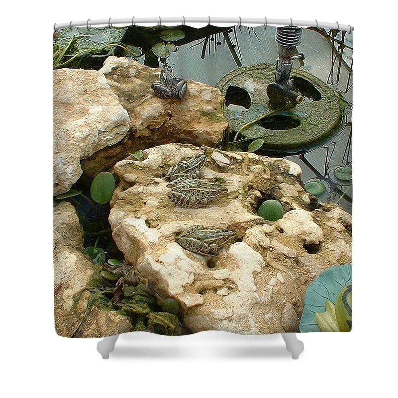 Frogs Shower Curtain featuring the photograph The Meeting by Bonfire Photography