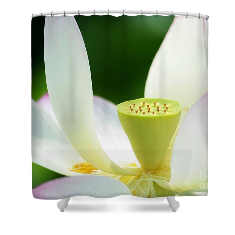 Lotus Shower Curtain featuring the photograph The Middle Of A Lotus by Sabrina L Ryan