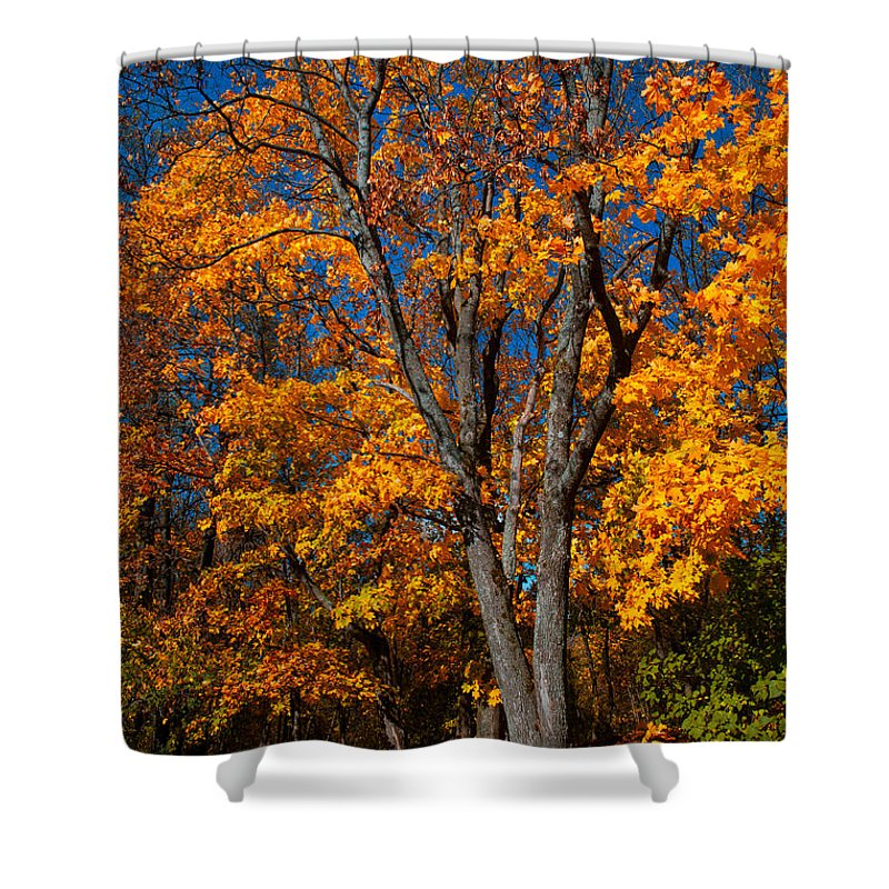 Autumn Shower Curtain featuring the photograph The Moment Of Glory by Jenny Rainbow