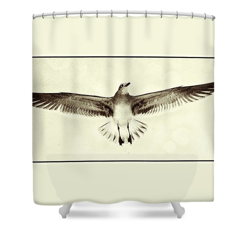 Beach Shower Curtain featuring the photograph The Perfect Wing by Jim Moore