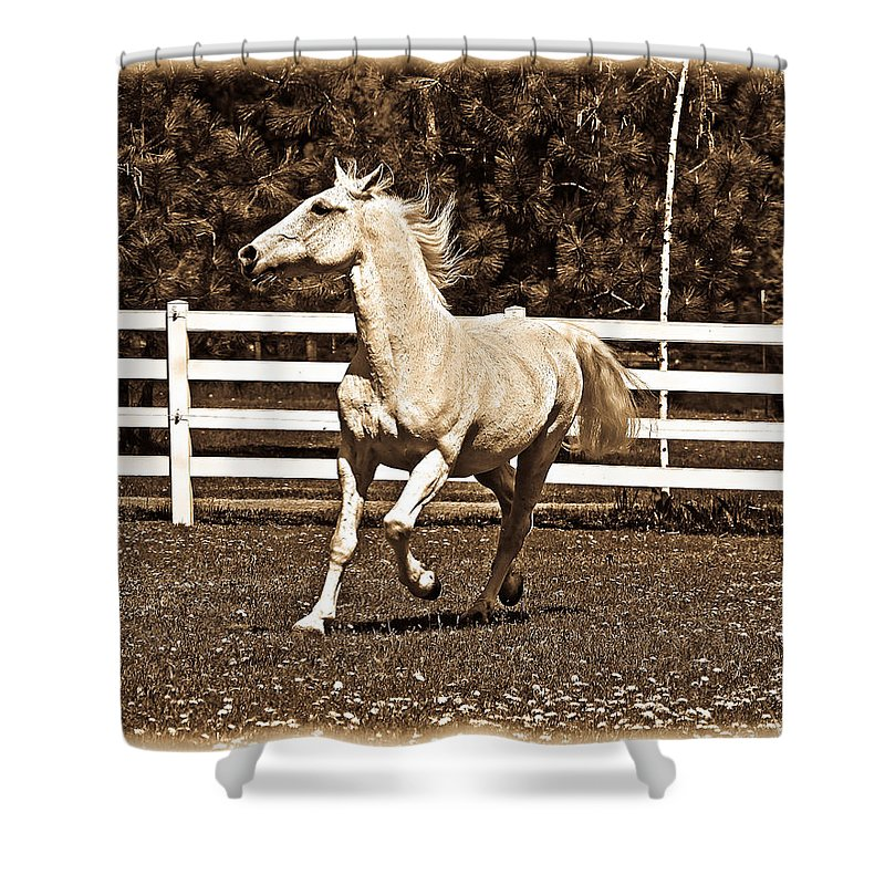 White Horses Shower Curtain featuring the photograph The Prance by Steve McKinzie