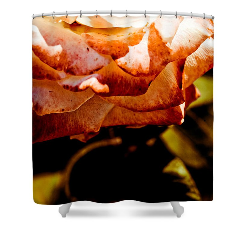 Rose Shower Curtain featuring the photograph The Rose by Olivier De Rycke