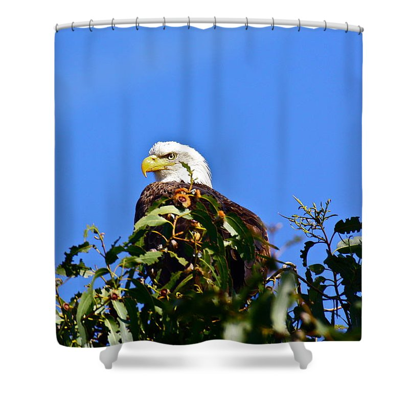 Birds Shower Curtain featuring the photograph The Sentinel by Diana Hatcher