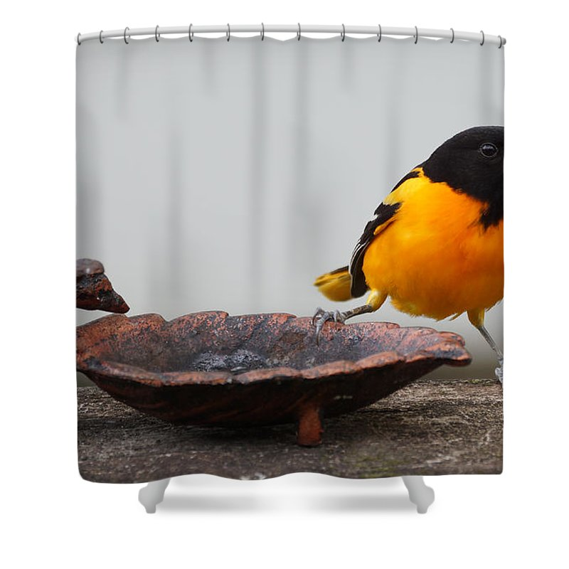 Oriole Shower Curtain featuring the photograph The Splits by Lori Tordsen