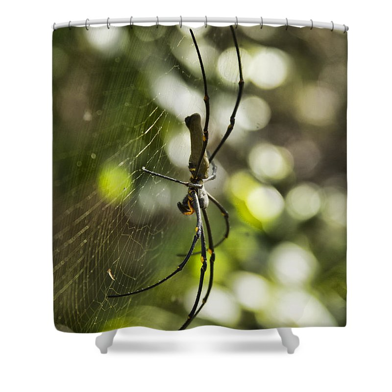 Golden Orb Spider Shower Curtain featuring the photograph The Waiting Game by Douglas Barnard