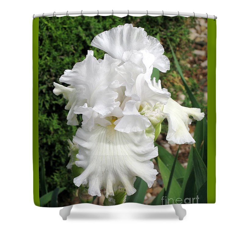 Greenery Shower Curtain featuring the photograph The White Iris by Phyllis Kaltenbach