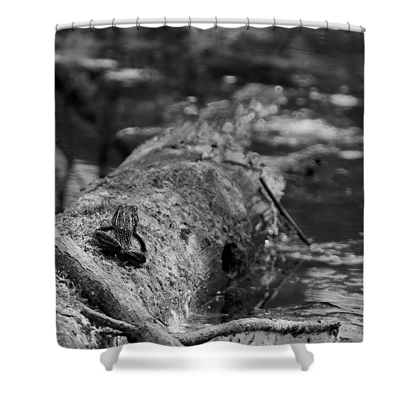 Usa Shower Curtain featuring the photograph There Is A Frog On The Log by LeeAnn McLaneGoetz McLaneGoetzStudioLLCcom