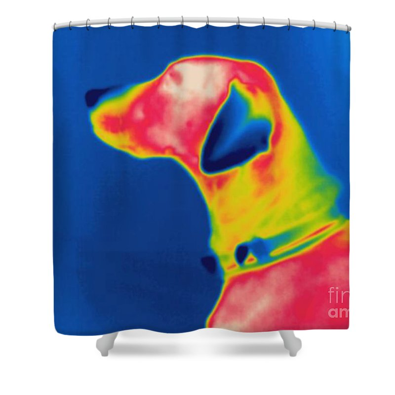 Thermogram Shower Curtain featuring the photograph Thermogram Of A Dog by Ted Kinsman