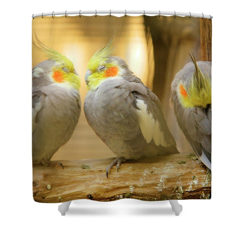 Cockatiels Shower Curtain featuring the photograph They Love Each Other But Nobody Loves Me by Ian Middleton