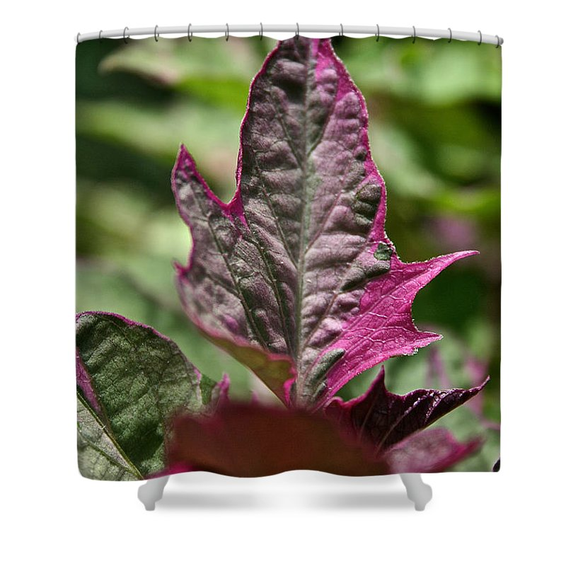 Plant Shower Curtain featuring the photograph This End Up by Susan Herber