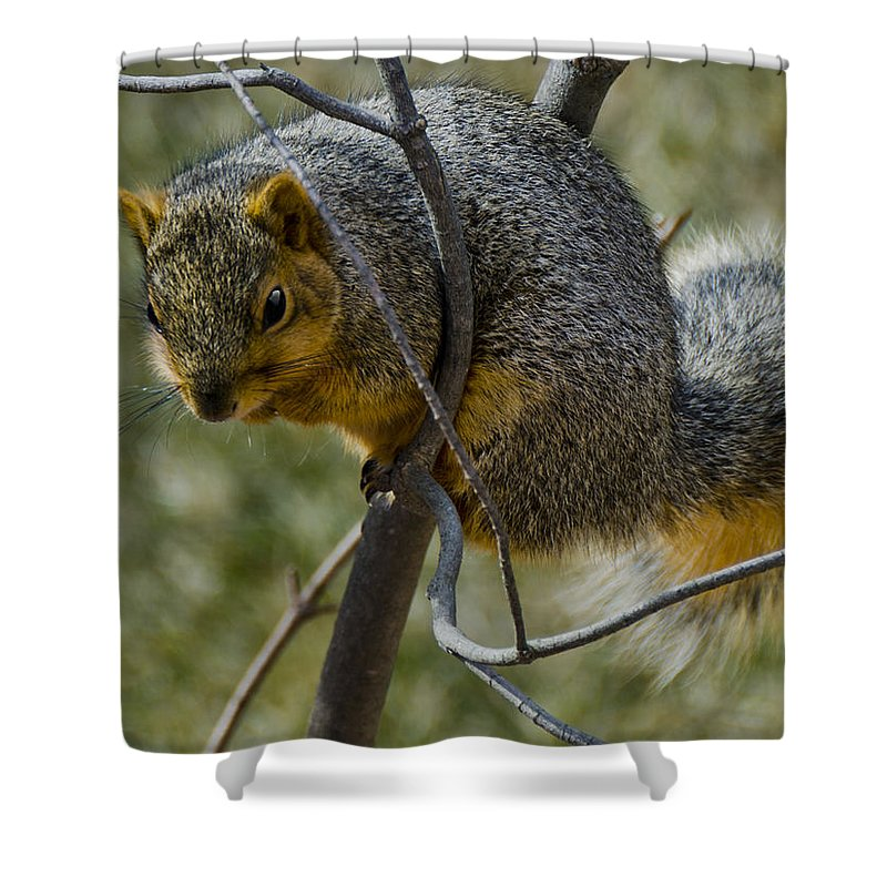 Usa Shower Curtain featuring the photograph This Is My Tree by LeeAnn McLaneGoetz McLaneGoetzStudioLLCcom