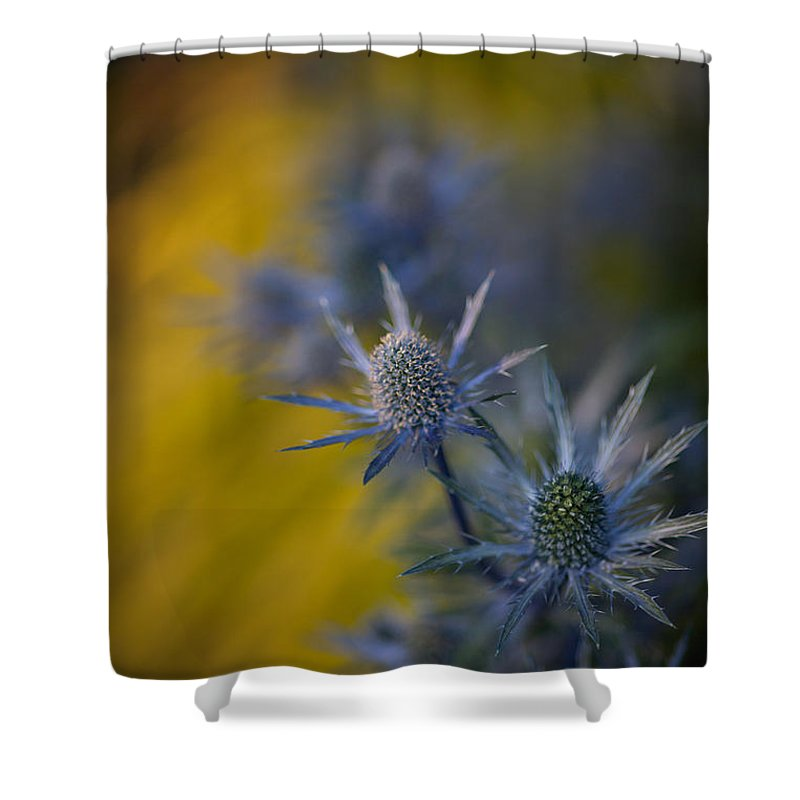 Flower Shower Curtain featuring the photograph Thistles Motion by Mike Reid