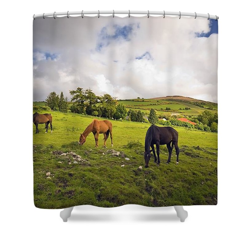 Grazing Shower Curtain featuring the photograph Three Horses Grazing In Field by Millan Knapik