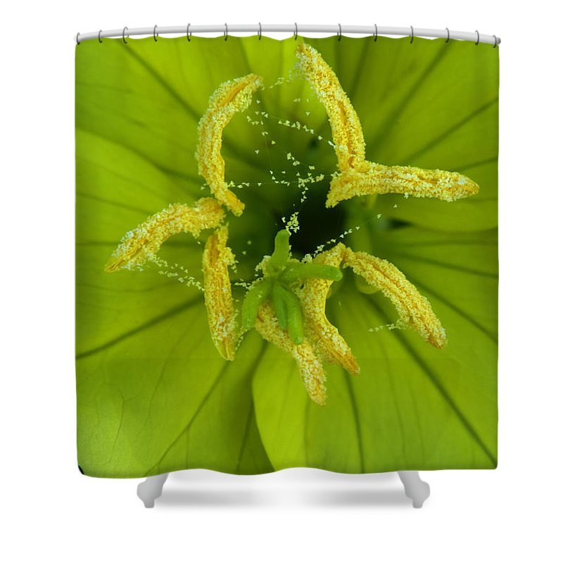 Oenothera Triloba Shower Curtain featuring the photograph Three Lobed Evening Primrose by Daniel Reed
