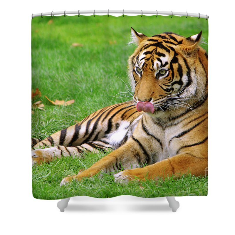 Anger Shower Curtain featuring the photograph Tiger by Carlos Caetano