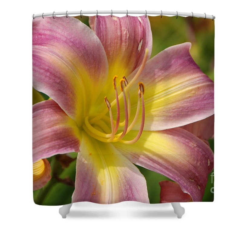 Tiger Lilly Shower Curtain featuring the photograph Tiger Lilly by Grace Grogan