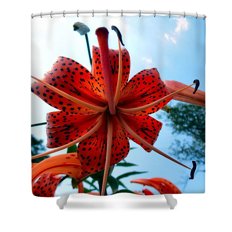 Tiger Shower Curtain featuring the photograph Tigerlily by Art Dingo