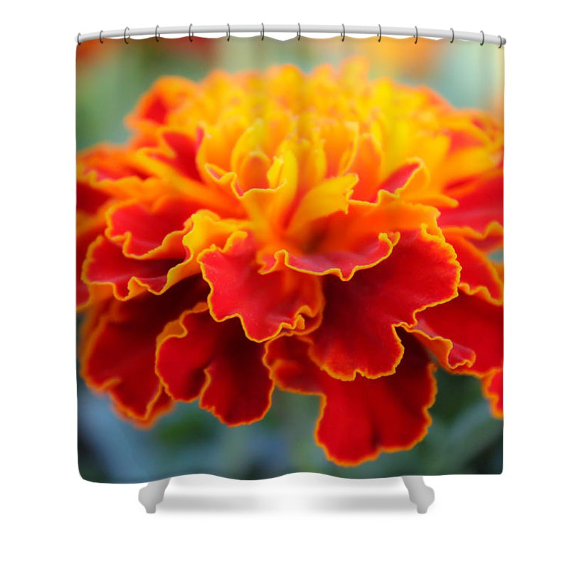 Tiny Flame Shower Curtain featuring the photograph Tiny Flame 2 by Rachel Cohen