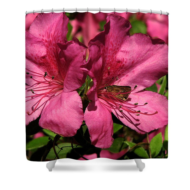 Nature Shower Curtain featuring the photograph Tiny Visitor by Peg Urban