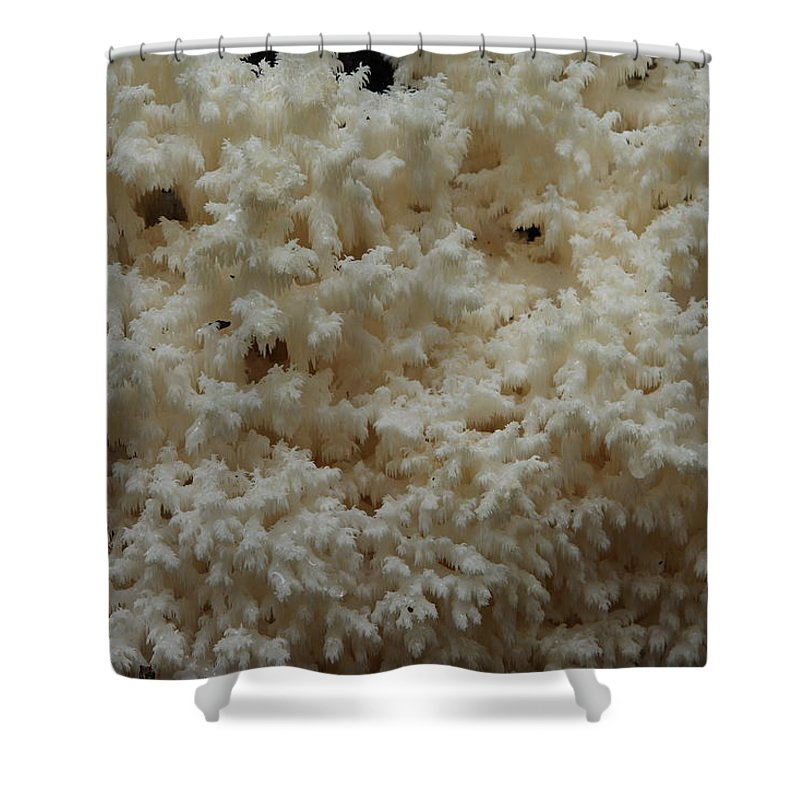 Hericium Coralloides Shower Curtain featuring the photograph Tooth Fungus by Daniel Reed