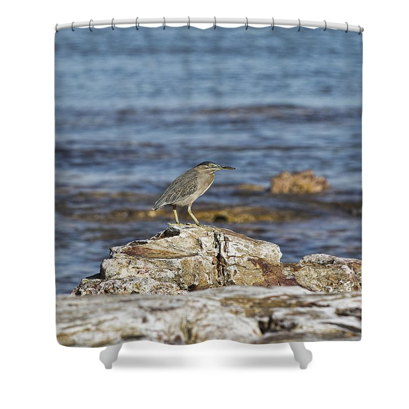 Pied Heron Shower Curtain featuring the photograph Top Spot by Douglas Barnard
