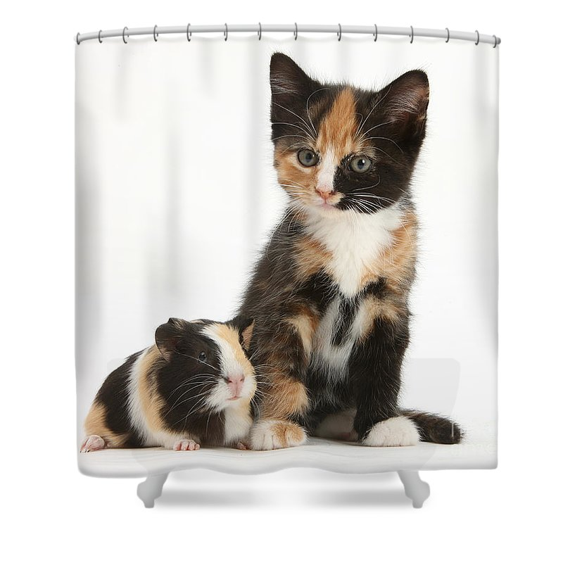 Nature Shower Curtain featuring the photograph Tortoiseshell Kitten With Baby by Mark Taylor