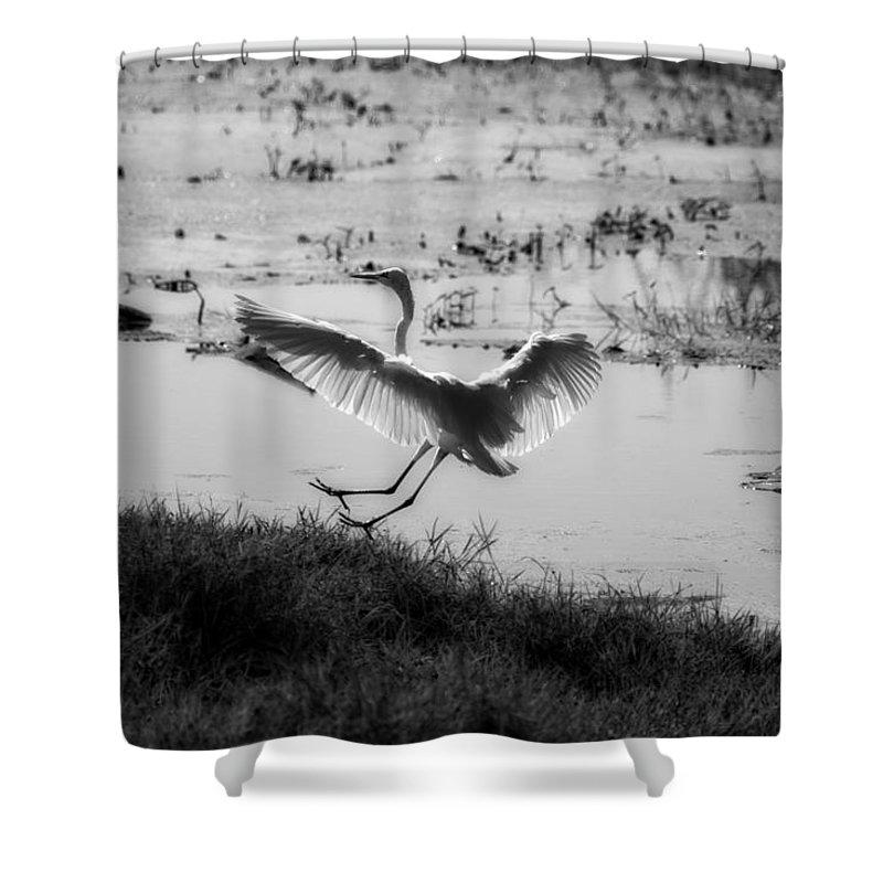 Egret Shower Curtain featuring the photograph Touchdown by Douglas Barnard
