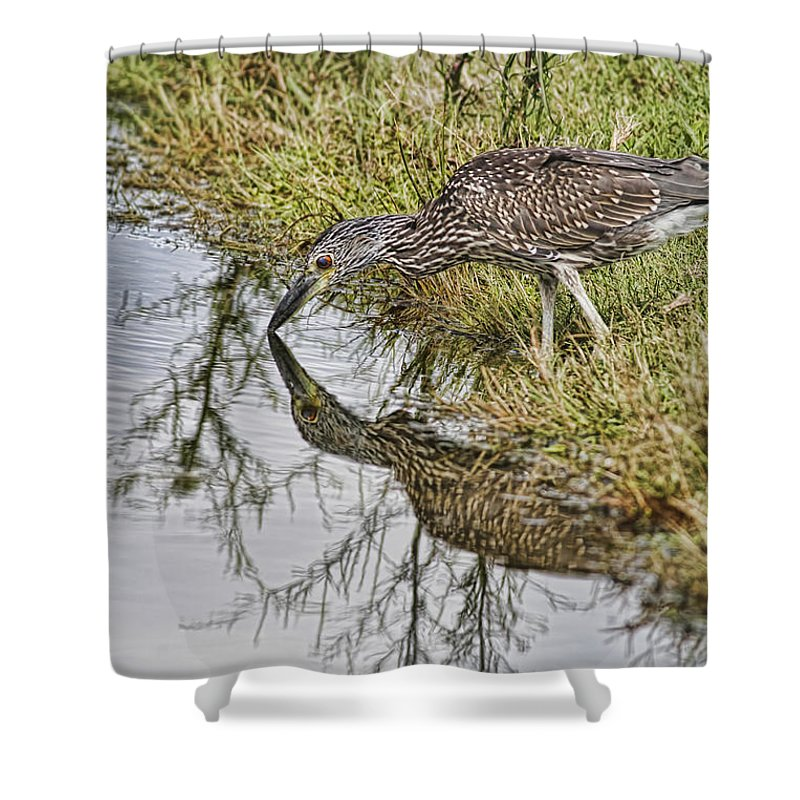 Wildlife Shower Curtain featuring the photograph Touching Nose To Nose by Deborah Benoit