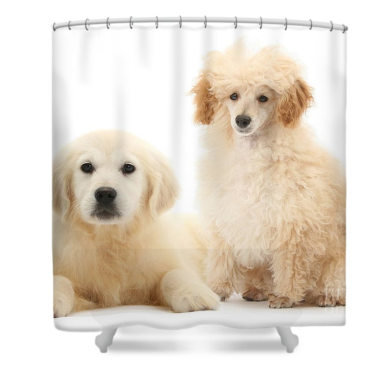 Animal Shower Curtain featuring the photograph Toy Poodle And Golden Retriever by Mark Taylor