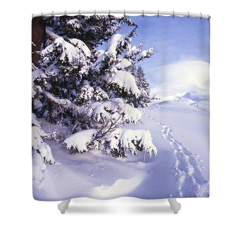 Branches Shower Curtain featuring the photograph Tracks In The Snow by Natural Selection Craig Tuttle