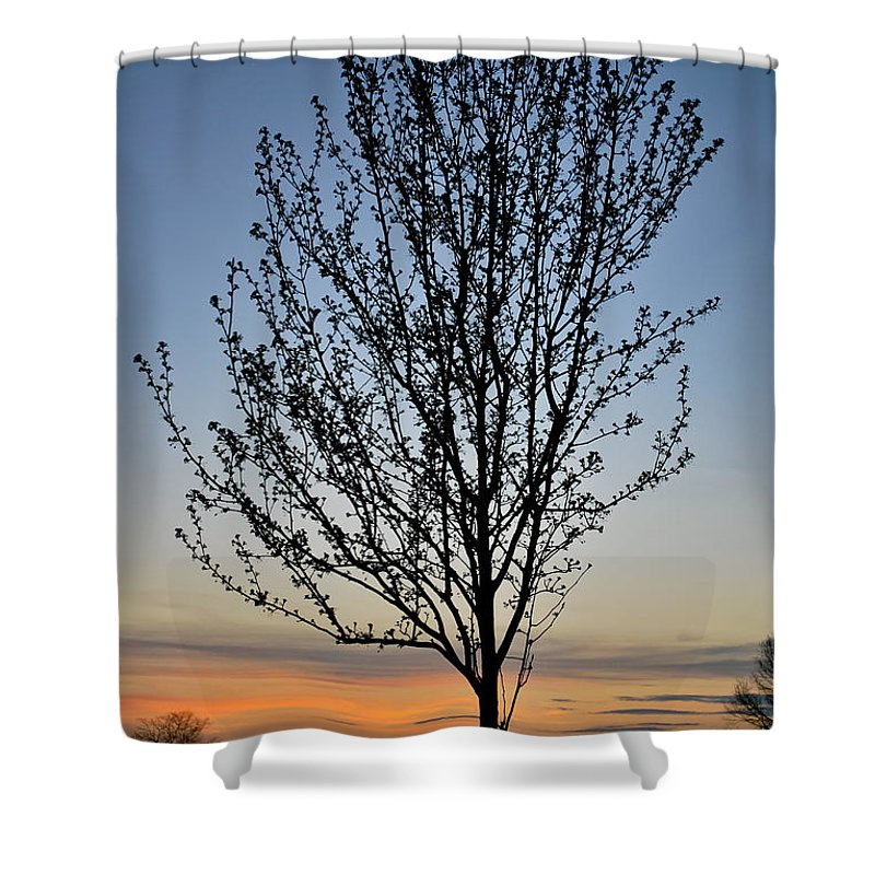 Tree Shower Curtain featuring the photograph Tree At Sunset by Wayne King