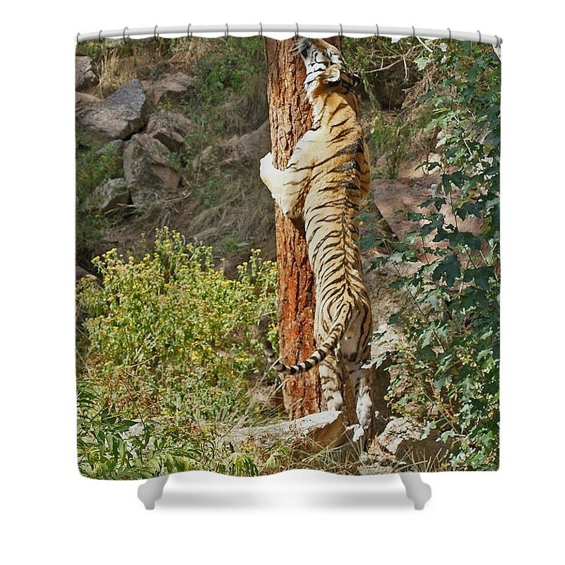 Tiger Shower Curtain featuring the photograph Tree Hugger by Ernie Echols