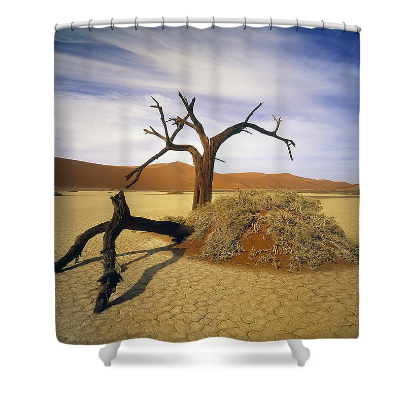 Light Shower Curtain featuring the photograph Tree In Desert by Darwin Wiggett