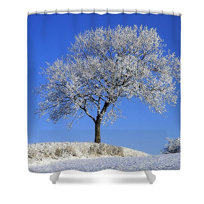 Down Shower Curtain featuring the photograph Tree In Winter, Co Down, Ireland by The Irish Image Collection