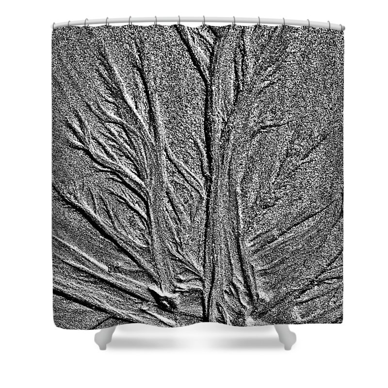 Sand Shower Curtain featuring the photograph Tree Of Life In The Sands Of Time Hdr Conversion by Glenn Gordon