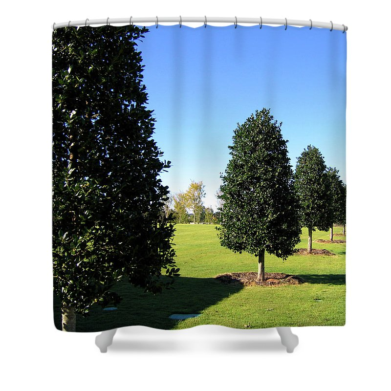 Trees Shower Curtain featuring the photograph Tree Perspective by Denise Keegan Frawley
