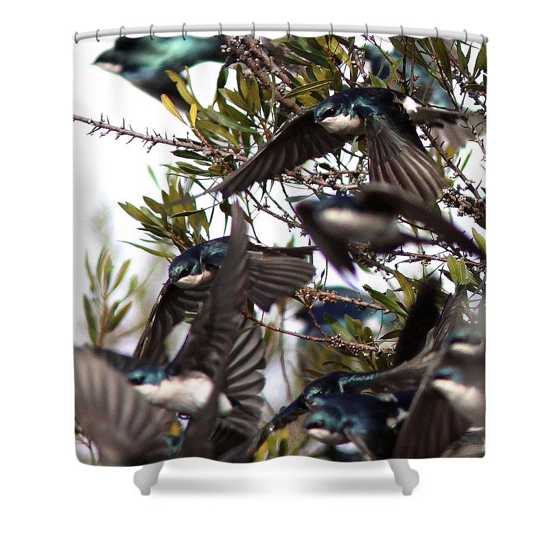 Flock Shower Curtain featuring the photograph Tree Swallow - All Swallowed Up by Travis Truelove