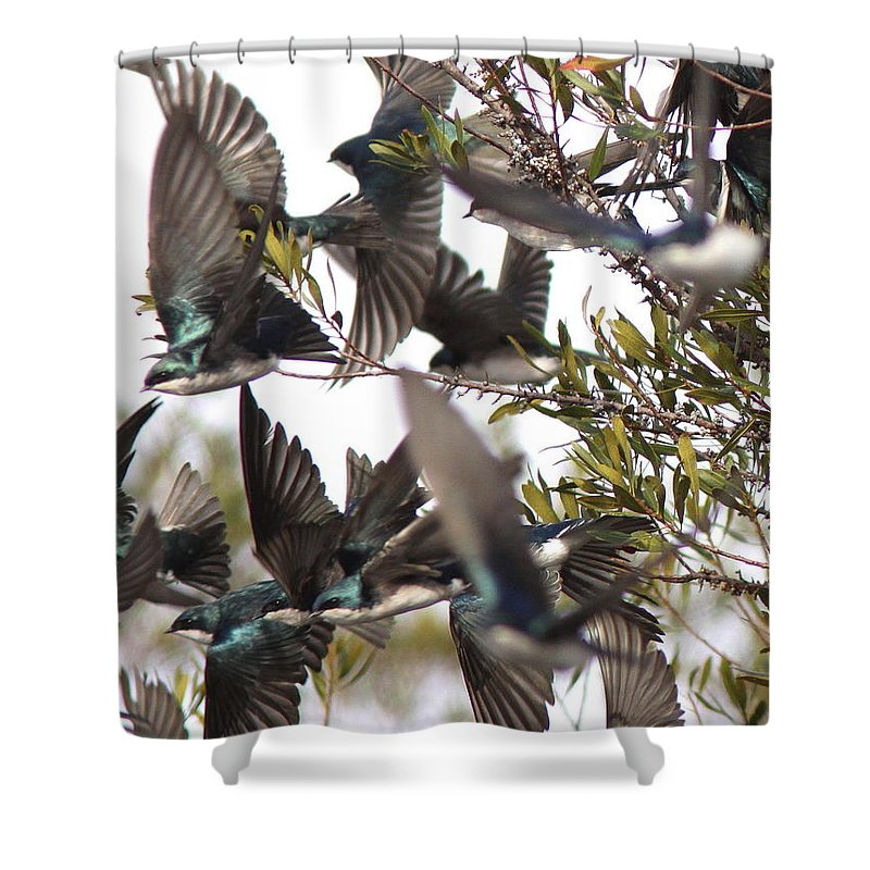 Swallow Shower Curtain featuring the photograph Tree Swallow Frenzy by Travis Truelove