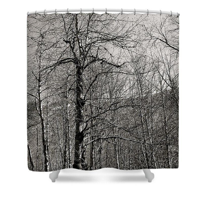 Trees Shower Curtain featuring the photograph Trees And Hillside by Linda Hutchins