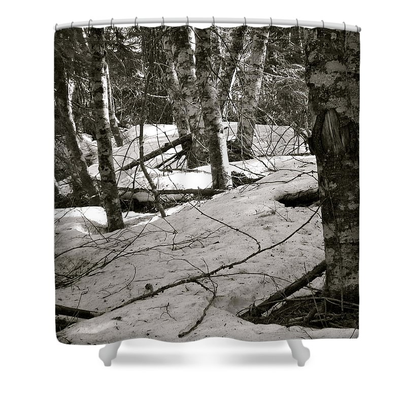 Trees Shower Curtain featuring the photograph Trees And Snow In April by Linda Hutchins