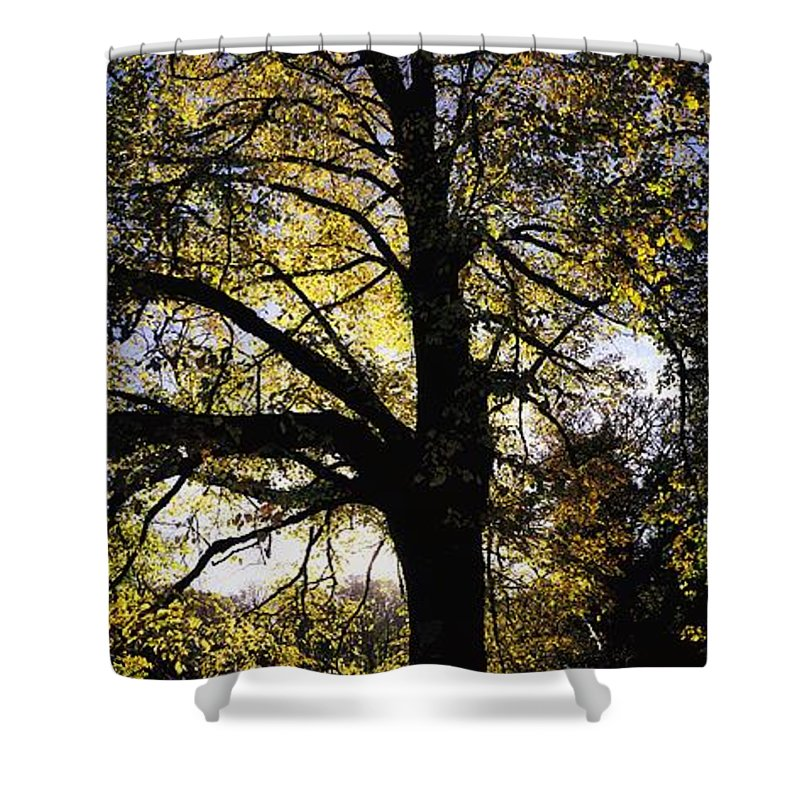 Beauty Shower Curtain featuring the photograph Trees During Autumn by The Irish Image Collection