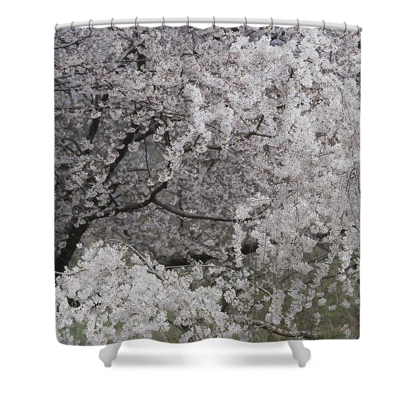 Plants Shower Curtain featuring the photograph Trees Heavy With Cherry Blossoms by Darlyne A. Murawski