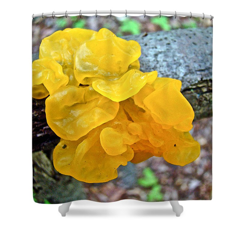 Mushroom Shower Curtain featuring the photograph Tremella Mesenterica - Yellow Brain Fungus by Mother Nature