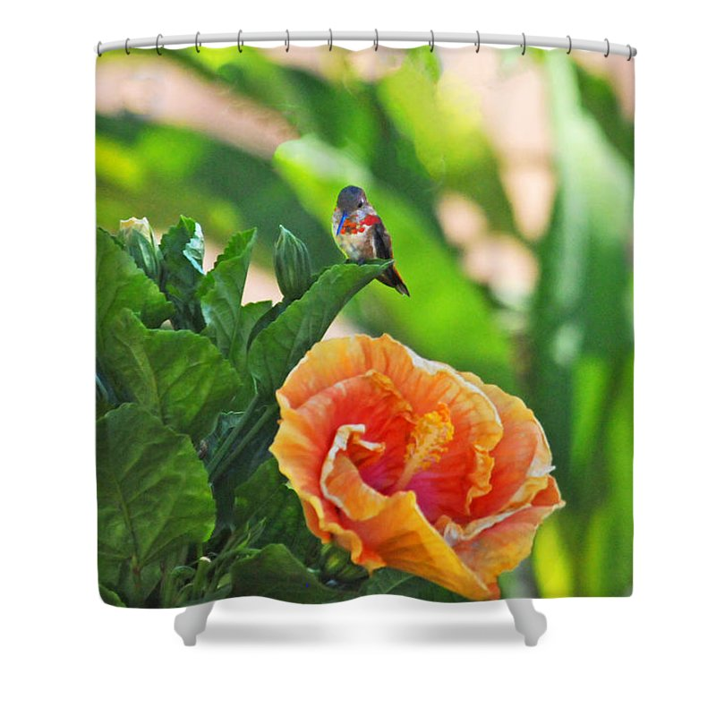 Hummers Shower Curtain featuring the photograph Tropical Hummer by Lynn Bauer