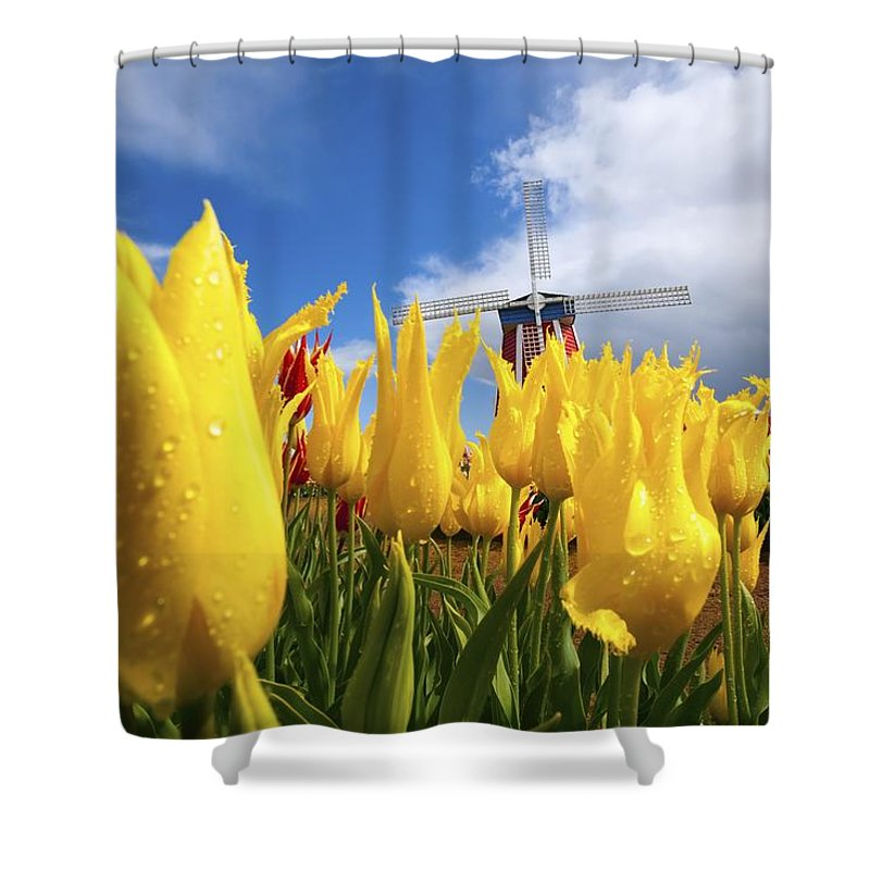 Field Shower Curtain featuring the photograph Tulips In A Field And A Windmill At by Craig Tuttle