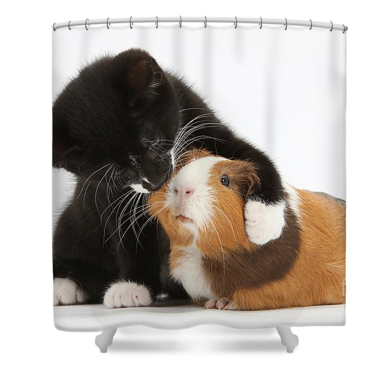 6a0d1cd6c Tuxedo Kitten Hugging Guinea Pig Shower Curtain for Sale by Mark Taylor